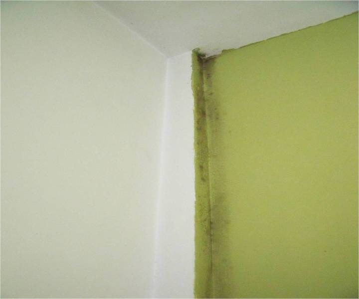 moho en paredes